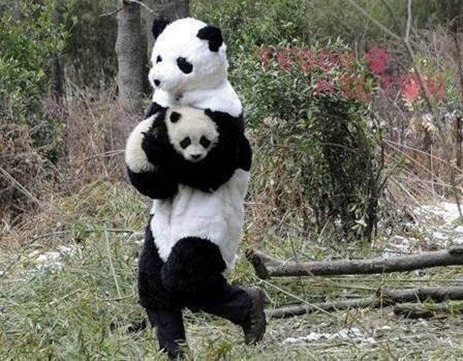 china-panda-researchers-4